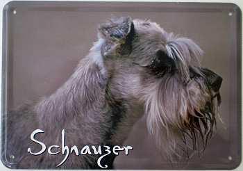 Blechpostkarte Hunde - Schnauzer - Vorschau