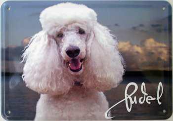 Blechpostkarte Hunde - Pudel