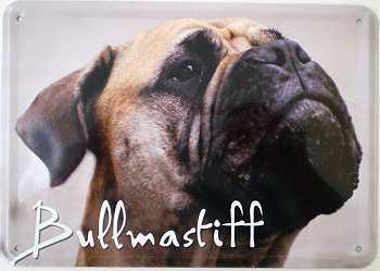 Blechpostkarte Hunde - Bullmastiff - Vorschau