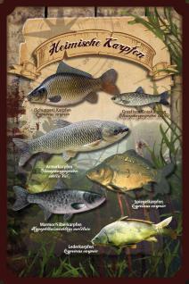 Fische - Heimische Karpfen Blechschild