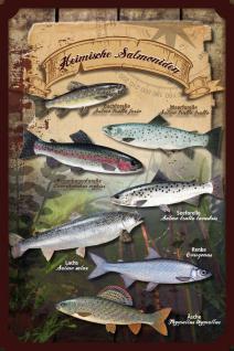 Fische - Heimische Salmoniden. Blechschild