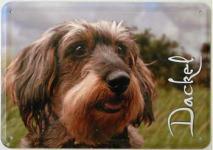 Blechpostkarte Hunde - Dackel