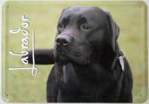 Blechpostkarte Hunde - Labrador