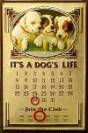 It's a Dog's Life Kalender Blechschild
