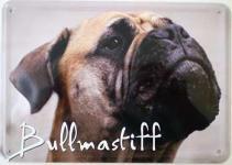 Blechpostkarte Hunde - Bullmastiff