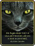 Funschild Die Augen einer Katze