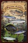 Fische - Heimische Seefische. Blechschild