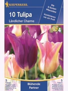 Blühende Partner Ländlicher Charme Tulpenmischung Elegant Lady und Purple Dream
