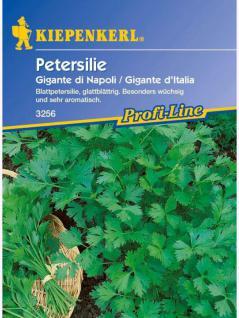Petersilie Gigante di Napoli Gigante de Italia