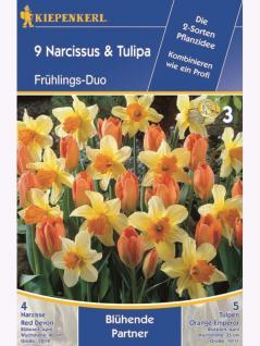 Blühende Partner Narzissen Red Devon + Tulpen Orange Emperor
