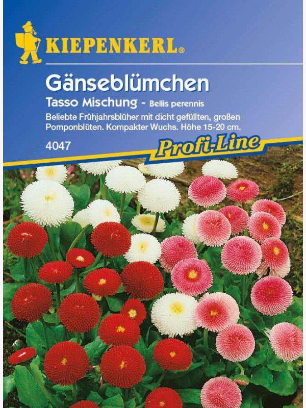 Bellis perennis Gänseblümchen Tasso Mischung