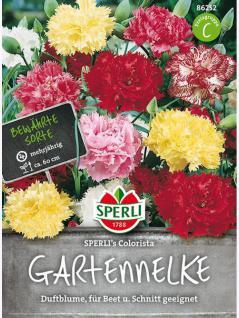 Gartennelke SPERLING`s Colorista