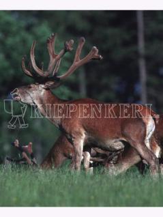 Kiepenkerl Wildwiese mit Klee und Kräutern (10 kg)