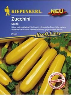 Zucchini Soleil goldgelb