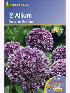Zierlauch Allium x hybrida Summer Drummer lilablau mit weiß