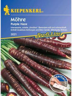 Möhren Purple Haze F1 schwarze Urmöhre Saatband 5mtr