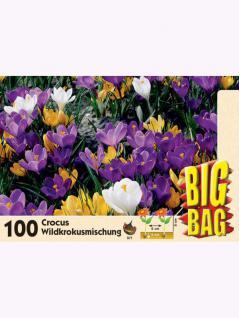 Big Bag Wildkrokusmischung 100 Stück