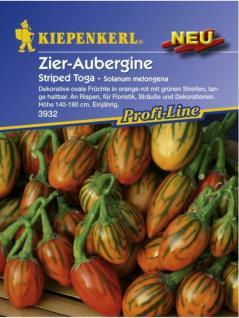 Solanum melongena Zier-Aubergine Striped Toga