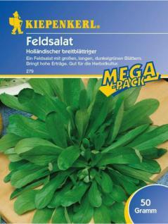 Feldsalat holländischer breitblättriger 50gr