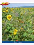 Blühende Landschaft mehrjährig 1kg