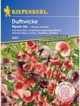 Lathyrus odoratus Edelwicken Ripple Mix gepunktete Blüten