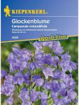 Campanula rotundifolia Glockenblume