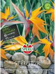 Paradiesvogelblume Strelitzia reginae Sperling`s Papagei