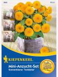 Mini-Anzucht Set Sonnenblume Helianthus Teddybär