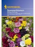 Sommerblumen-Mischung