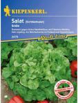 Salat Eichblattsalat Smile resistent