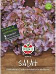 Salat (Eichblattsalat) Navara