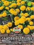 Tagetes Studentenblume Petite Gelb