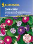 Ipomoea purpurea Prunkwinde Tricolore Mischung