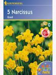 Botanische Narzissen jonquilla Quail gelb