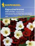 Tropaeolum minus Kapuzinerkresse Night&Day