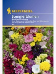 niedrige Sommerblumen-Mix