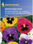 Viola x wittrockiana Stiefmütterchen Nebelungs Grandessa Mischung