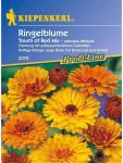 Calendula officinalis Ringelblume Touch of Red Mix Mischung mit roter Rückseite