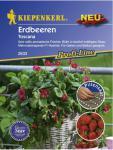 Erdbeere Ziererdbeere Toscana Pillensaat