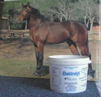 Elektrolyt gibt Energie für Sportpferde