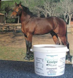 Kieselgur für Pferde für gesunde Haut und Fell