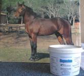 Magnesium für nervöse und unruhige Pferde