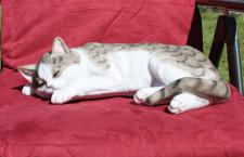 Schöne Dekofigur schlafende Katze Tierdeko Katzenfigur Deko für Innen und Außen