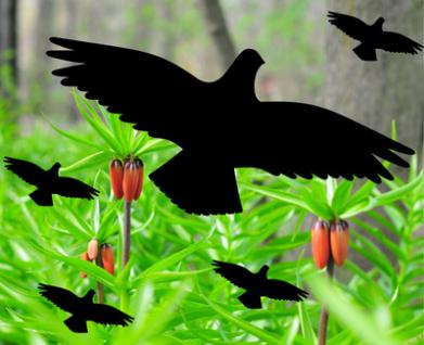 5 Vögel Vogel Aufkleber Silhouetten für Fensterscheiben Fenster Wintergarten Set