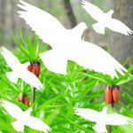 set shadow birds white die cut Window glass Protection decals vinyl stickers