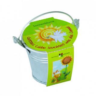 Sonnenblumen-Pflanzenset