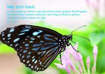 Postkarte Schmetterling (10 Stck)