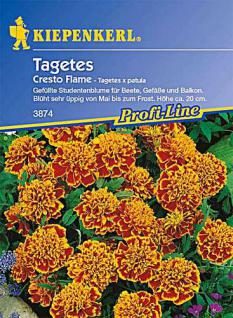 Kiepenkerl Tagetes p. Cresto Flame