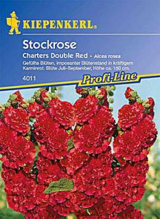 Kiepenkerl Alcea rosea Chaters Double Red - Vorschau