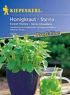 Kiepenkerl Topfpfl.Stevia Sweet Honey